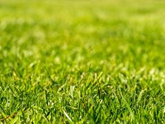 Why Choose Sod over Natural Grass